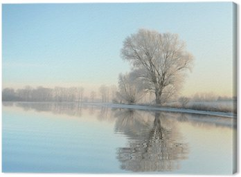 Winter trees covered with frost on a cloudless morning