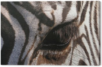 Canvas Print zebra – close-up on eye