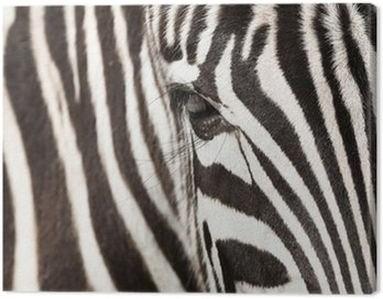 Canvas Print Zebra detail
