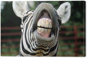 Canvas Print zebra smile and teeth