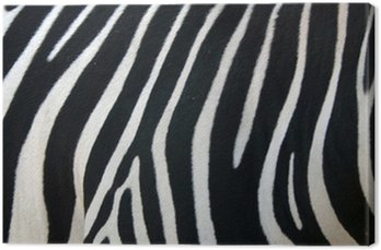 Canvas Print zebra stripes