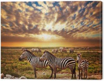 Zebras herd on African savanna at sunset. Safari in Serengeti