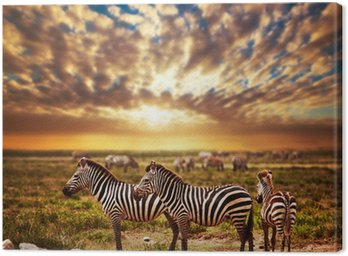 Canvas Print Zebras herd on African savanna at sunset. Safari in Serengeti