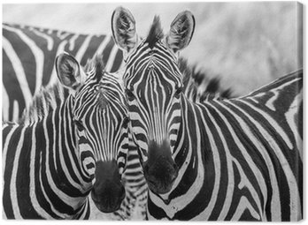 Canvas Print Zebre innamorate