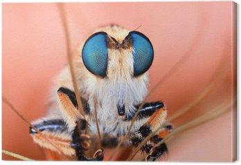 Canvas Roberfly