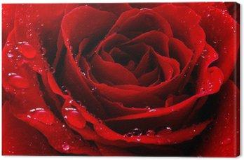 Canvas Rode roos met water druppels