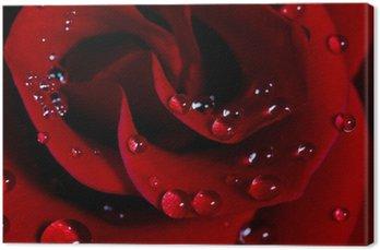 Canvas Roos met waterdruppels