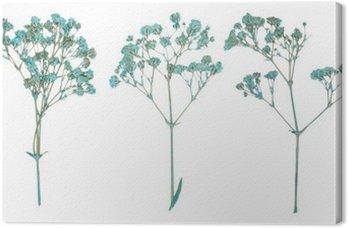 Canvas Set van wilde droge gedrukte bloemen