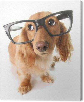 Canvas Smart puppy