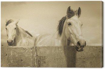 Canvas Twee witte paarden