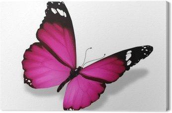 Canvas Violet vlinder, geïsoleerd op wit