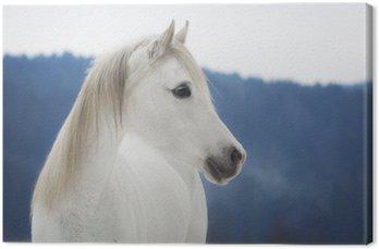 Canvas Weiße Vollblut Araber Stute im Schnee