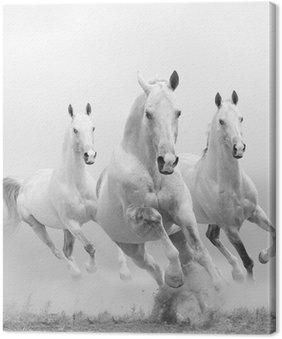 Canvas Witte paarden in stof