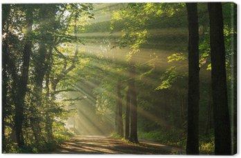 Canvas Zonnestralen in het bos