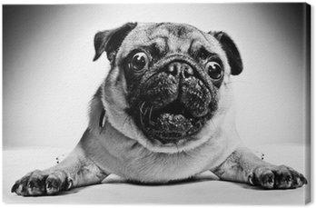 Canvas Zwart-wit portret van een pug