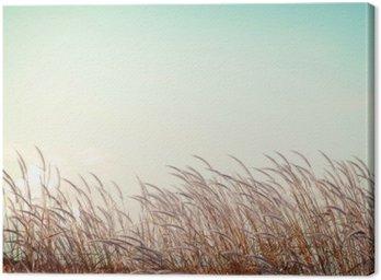 Canvastavla Abstrakt tappning natur bakgrund - mjukhet vit fjäder gräs med retro blå sky