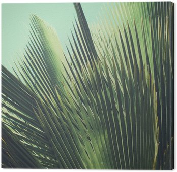 Canvastavla Abstrakt tropisk vintage bakgrund. Palmblad i solljus.