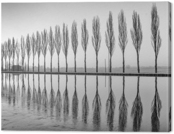 Canvastavla Alberi riflessi sul lago all'alba i bianco e nero