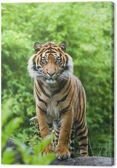 Canvastavla Asian-eller Bengal tiger med bambu buskar bakgrund