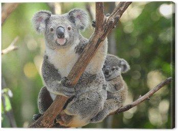 Canvastavla Australian Koalabjörn med sitt barn, Sydney, Australien grå björn