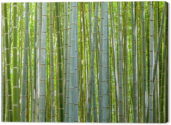 Canvastavla Bambu bakgrund i naturen på dagen