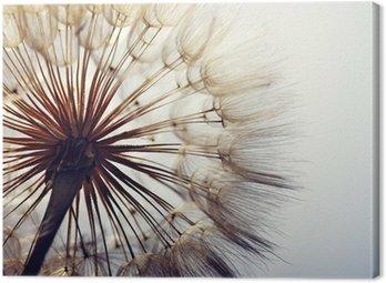 Canvastavla big dandelion on a blue background