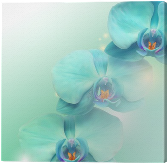 Canvastavla Blomma Orchid bakgrund