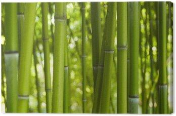 Canvastavla Bus Bamboo 06