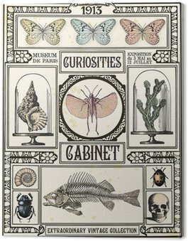 Canvastavla Curiosities skåp