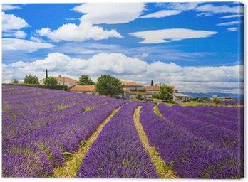 Canvastavla Feelds blommande lavander, Valensole, Provence, Frankrike, Europa