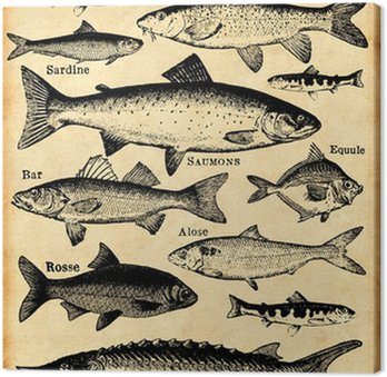 Canvastavla Fisk