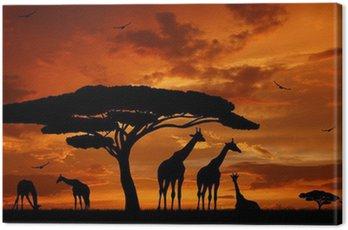 Canvastavla Flock giraffer i den sjunkande solen