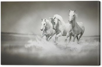 Canvastavla Flock vita hästar som löper genom vatten