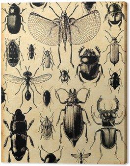 Canvastavla Förtjust insectes rétro