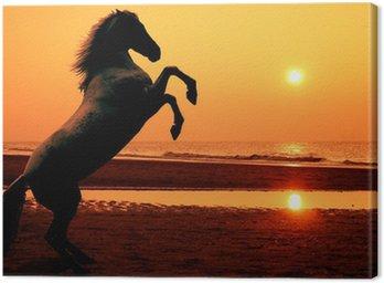 Canvastavla Fostra häst i solnedgången