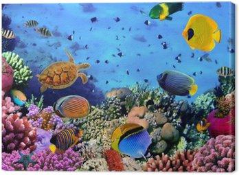 Canvastavla Foto av en korall koloni