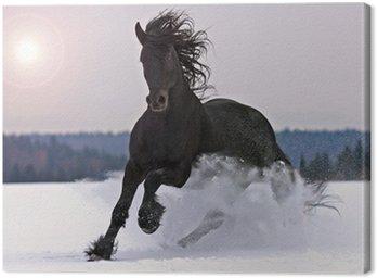 Canvastavla Frisiska hästen på snö