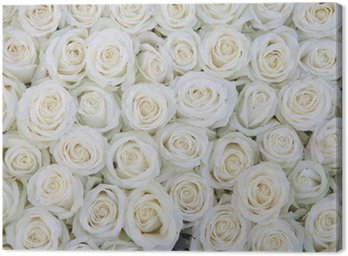 Canvastavla Grupp av vita rosor efter en regndusch