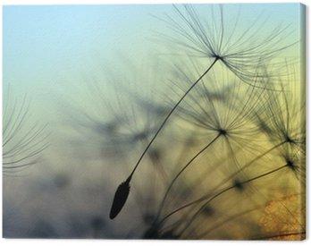 Canvastavla Guld- solnedgång och maskros, meditativ zen bakgrund