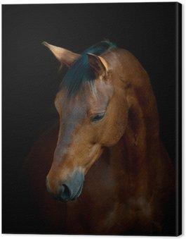 Canvastavla Häst på svart