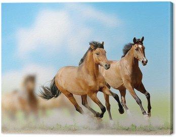 Canvastavla Hästar