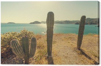 Canvastavla Kaktus i Mexiko