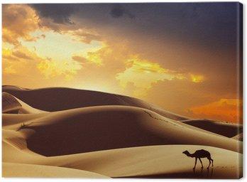 Canvastavla Kamel i Sahara, Marocko