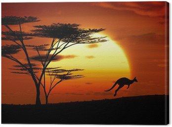 Canvastavla Känguru solnedgång australien