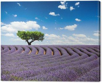 Canvastavla Lavande Provence Frankrike / lavendel fält i Provence, Frankrike