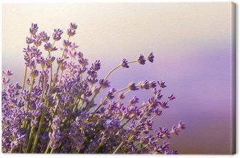 Canvastavla Lavendel blommor blomma sommartid