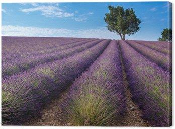 Canvastavla Lavendel fält i Valensole platån, Provence (Frankrike)
