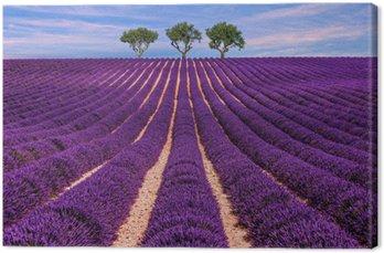 Canvastavla Lavendel fält sommar solnedgång landskap med träd