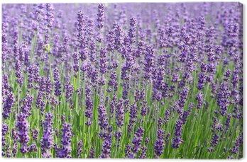 Canvastavla Lavendel