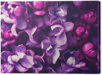 Canvastavla Lila blommor bakgrund